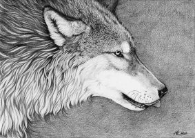 ::Wolf:: by ChristinaMandy
