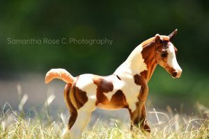 Foal I by SamanthaRoseCPhoto