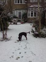 Snow Day: Now With Added Puppy by Kmadden2004