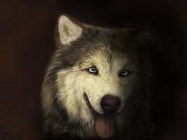 malamute by cottondragon