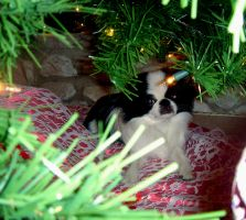 Bandit in the Tree by Dirt206