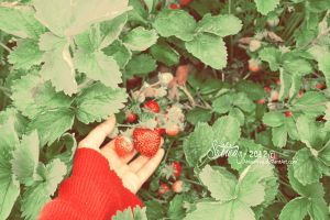 Strawberries II by Ahlawiyya