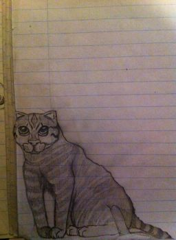 Cat-Notebook by CYoma