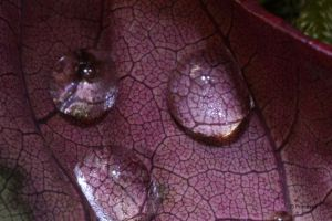 Waterdrops 9 by Prototyps