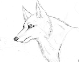 Another Wolf by Kittycatrat