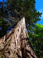 King of the Forest by Aroha-Photography
