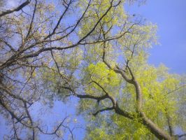 Tree Branches 01 by PCU-Stockage
