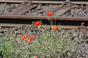 Oberhausen HBF Flowers by Avalarion