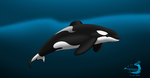 Tilikum by Sabre471