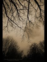 Gothic tree by GMCPhotographics