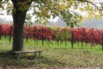 Vineyard Stock 02 by Malleni-Stock