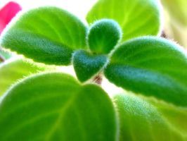 Fuzzy Leaves by Pianochick66
