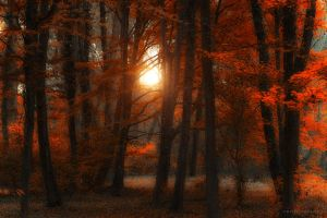truth by ildiko-neer