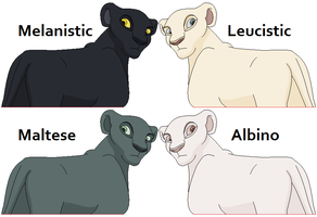 Animal Coat Colorations Ref. by FeralHeartsFan