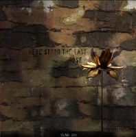 Here Stood the Last Rose by grace-note