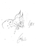 lynx sketch by LoD90