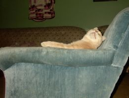 Lounging Cat 2 by blacksilence-stock