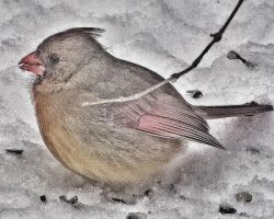 Cold Bird on Ice by wdlougee