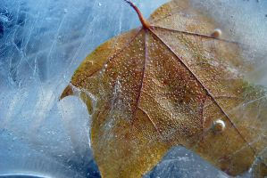 In fetters of an ice2 by Anestezia