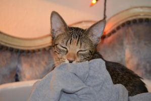 clean clothes, warm kitty by sunnylovin25