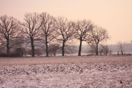 Winter 2012 - 20 by Eufrosis