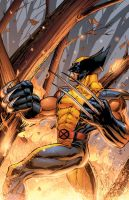 Wolverine by DashMartin