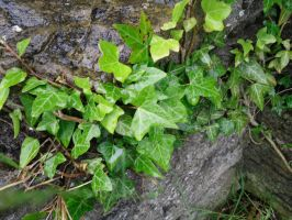 Stock: Ivy Wall by legendpendragon9