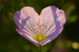"061006-III ""Heart Flower"" by killersnowman"