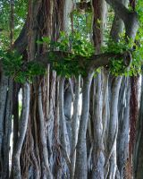 Roots and more roots by sHavYpus