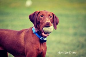 Play Ball by MonicaZhen
