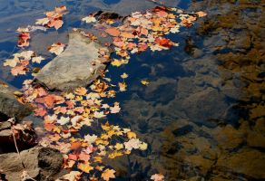Floating Fall by miss-masami
