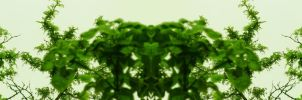 Organic Symmetry 7 by meathive