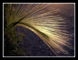Color Version Horsetail by CaroleLee