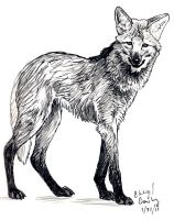 Maned Wolf by silvercrossfox