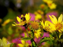 The Buzzy One by calciumblue