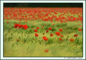 wheat and poppies II by bracketting94