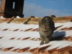 Toby on the roof 2 by Sanae78