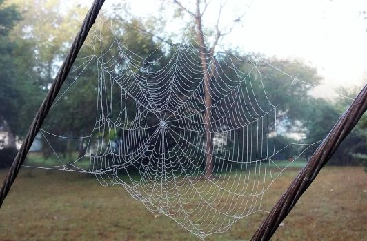 Large Spider Web by BackyardBirder
