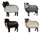 Livestock Customs: Shetlands for HyaIite by DaytonaBot