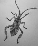 Bug Sketch by KrissyM0922