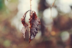 Brown Leaves by DevchonkaLucky