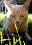 My Cat Nibbler by AG88