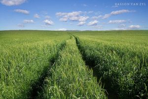 The wheat track by Bassonvz