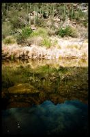 Sabino Canyon 2 by rifka1