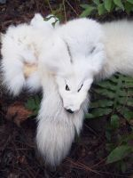 BEAUTIFUL Arctic Fox! For sale! by SPWilder
