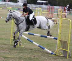 STOCK Showjumping 454 by aussiegal7