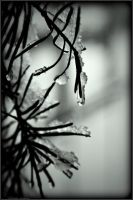 PLWA - Winter - emerald 25 by andyshade