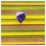 Landing stripes? by XanaduPhotography