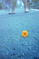 Life of Flower by vemano88