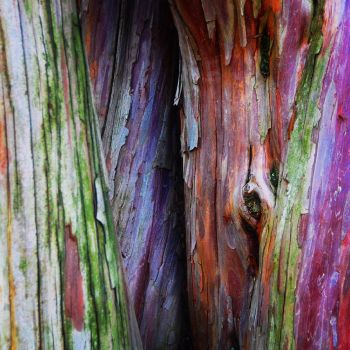 Colorful Bark by KirchyBaby